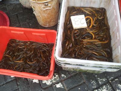 Wasserschlangen auf dem Markt
